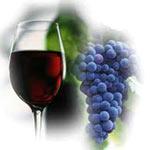 Grozdje i vino